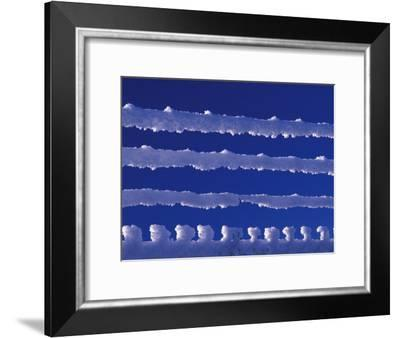 Hoar Frost on Fence, Yukon, Canada-Nick Norman-Framed Photographic Print
