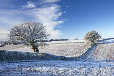 Hoar Frosted Farmland and Trees in Winter Time, Bow, Mid Devon, England. Winter-Adam Burton-Photographic Print