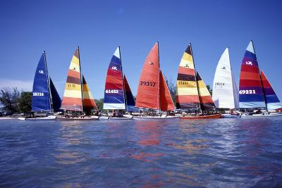 Hobie Cats Anchored and Lined Up Along the Shore, C.1990--Photographic Print