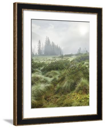 Hochmoor at the Prebersee, Salzburg, Austria-Rainer Mirau-Framed Photographic Print