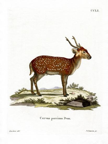 Hog Deer--Giclee Print