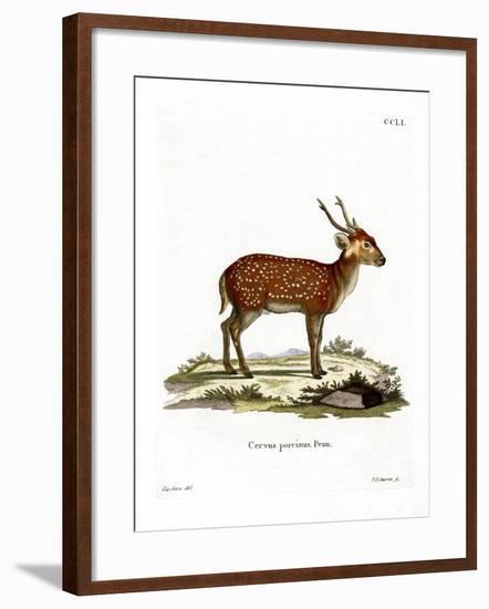 Hog Deer--Framed Giclee Print
