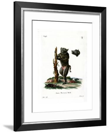 Hog-Faced Baboon--Framed Giclee Print