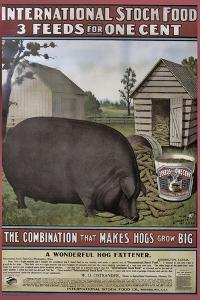 Hog Food