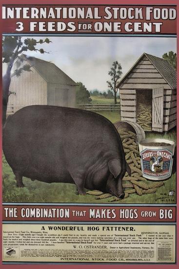 Hog Food--Giclee Print