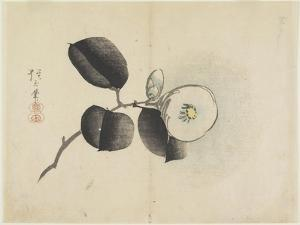 Camellia Flower and Bud, C. 1830 by Hogyoku
