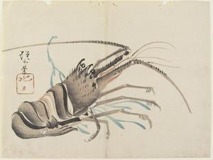 Crayfish, C. 1830 by Hogyoku
