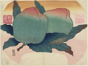 Fruit on Vine, C. 1830 by Hogyoku
