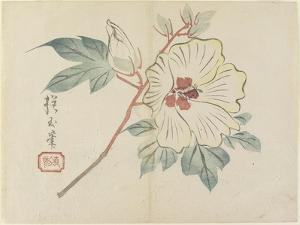 Large White Flower, C. 1830 by Hogyoku