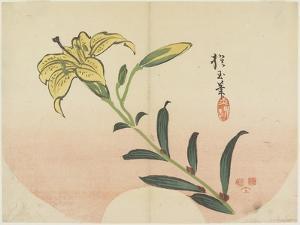 Lily, 1839 by Hogyoku