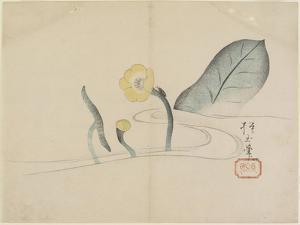 Lotus and a Gold Bug, C. 1830 by Hogyoku