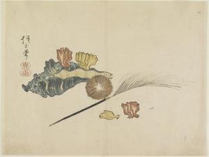Shells, C. 1830 by Hogyoku