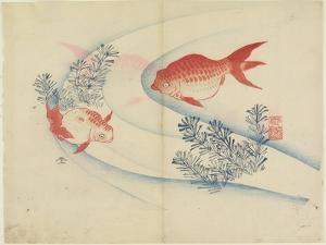 Two Goldfish in Water, C. 1830 by Hogyoku