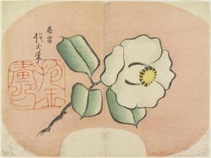 White Camellia, C. 1830 by Hogyoku