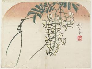 White Wisteria, C. 1830 by Hogyoku