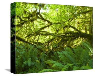 Hoh Rain Forest III-Richard Desmarais-Stretched Canvas Print