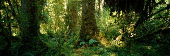 Hoh Rain Forest, Olympic National Park, Washington State, USA--Photographic Print