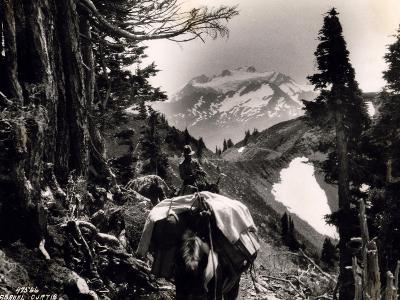 Hoh-Solduc Trail, Olympic Peninsula, Undated-Asahel Curtis-Giclee Print