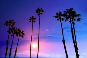 California High Palm Trees Purple Sunset Sky Silhouette Background USA by holbox