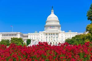 Capitol Building Washington DC Pink Flowers Garden USA Congress US by holbox