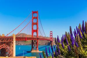 Golden Gate Bridge San Francisco Purple Flowers Echium Candicans in California by holbox