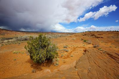 Hole in the Rock Road Near Escalante Utah Offers Many Scenic Spots-Richard Wright-Photographic Print
