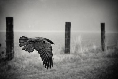 the day of the Raven