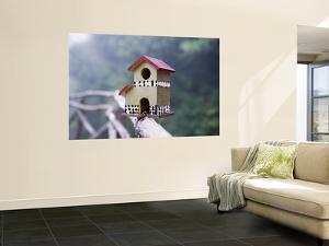 Bird House on Levada Do Furado Levada Walk by Holger Leue