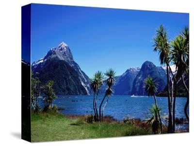 Cabbage Trees at Milford Sound with Mitre Peak in Background at Left