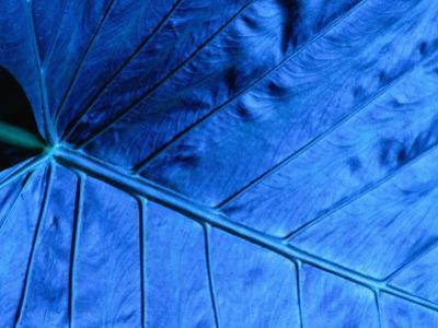 Close Up of Leaf, Welchman Hall Gully