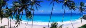 Coconut Trees Along Bottom Bay by Holger Leue