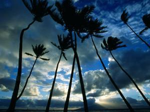Coconut Trees at Sunset, Lahaina, USA by Holger Leue