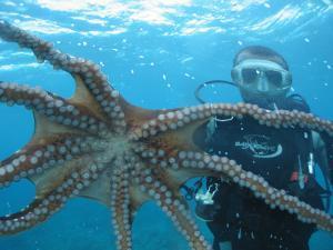 Diver Looking at Octopus at Blue Safari Submarine by Holger Leue