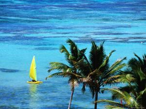Hobie Catamaran with Coconut Trees in Foreground by Holger Leue