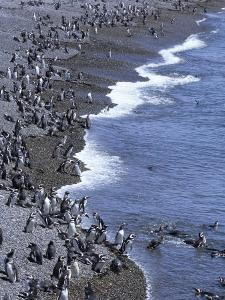 Magellan Penguin Colony, Punta Tombo, Patagonia, Punta Tombo Provincial Reserve, Argentina by Holger Leue