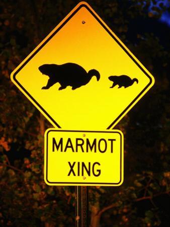 Marmot Crossing Sign Near Maroon Bells, Aspen, Colorado