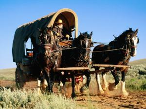 Mormon Man Driving Horse Carriage, Mormon Pioneer Wagon Train to Utah, Near South Pass, Wyoming by Holger Leue