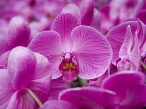 Orchid at Flower Market, Kowloon, Hong Kong, China by Holger Leue
