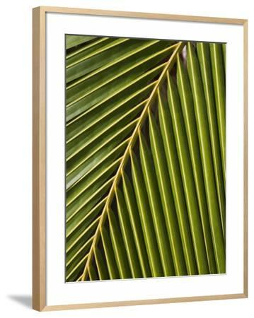 Palm Frond, Westpunt