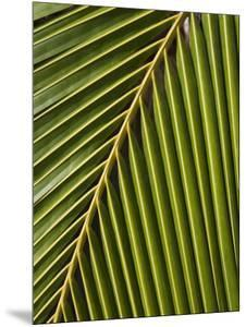 Palm Frond, Westpunt by Holger Leue