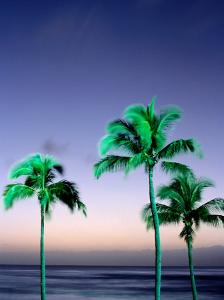 Palms at Dusk, Poipu, USA by Holger Leue