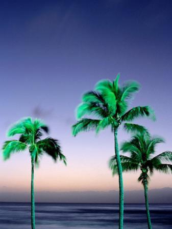 Palms at Dusk, Poipu, USA