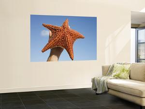 Person Holding Up Large Starfish at Curacao Sea Aquarium, Bapor Kibra by Holger Leue