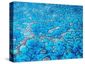 Reef, Heron Island, Queensland, Australia by Holger Leue