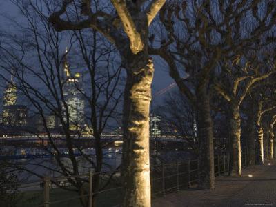 Tree-Lined Untermainufer and City Skyline at Night