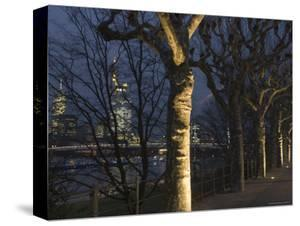 Tree-Lined Untermainufer and City Skyline at Night by Holger Leue
