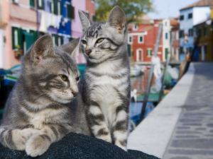 Venetian Cats Alongside Fond Die Terranova Canal by Holger Leue