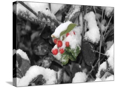 Holiday Berries-Lillian Yao-Stretched Canvas Print