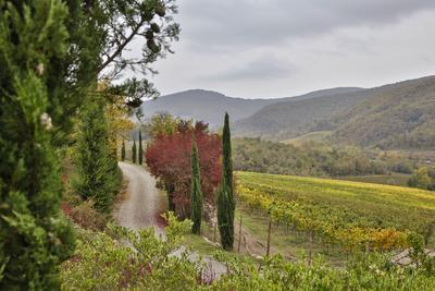 Italy, Radda in Chianti, Tuscany, A Path to the Hills, Villa Campomaggio