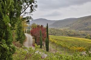 Italy, Radda in Chianti, Tuscany, A Path to the Hills, Villa Campomaggio by Hollice Looney